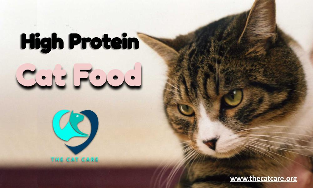 high protein cat food