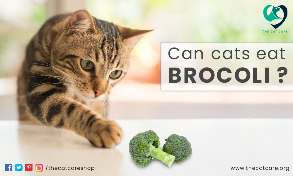 Can Cats Eat Broccoli
