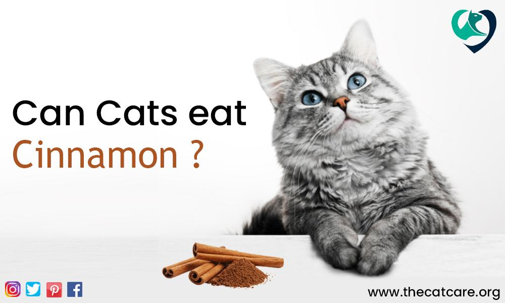 Can Cats Eat Cinnamon
